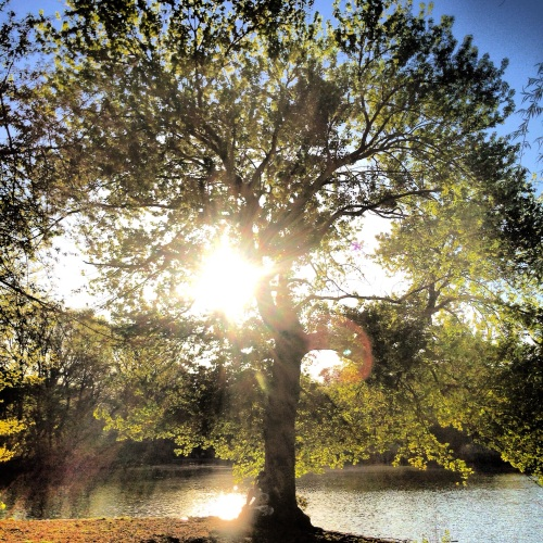 Tree of Light. Photo by Aimee Follette
